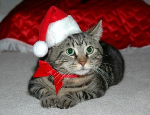 santa-cat